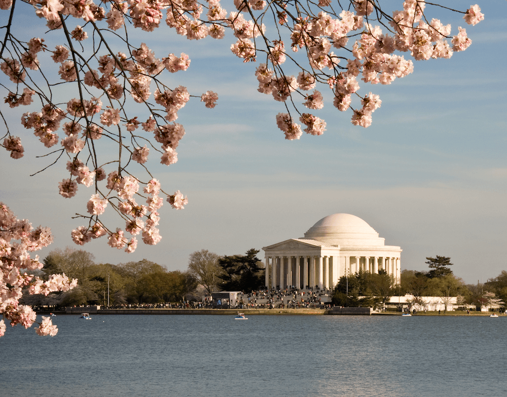 washington-dc-cherry-blossom-memorial.png