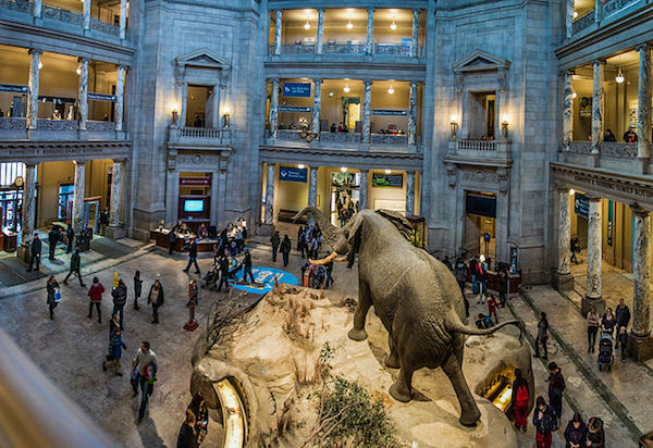 National-Museum-Natural-History-Washington-DC.jpg